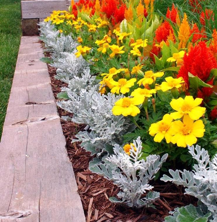 Какие цветы можно посадить на садовом участке